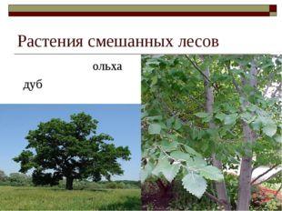 Растения смешанных лесов ольха дуб