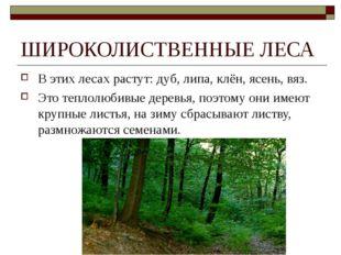 ШИРОКОЛИСТВЕННЫЕ ЛЕСА В этих лесах растут: дуб, липа, клён, ясень, вяз. Это т