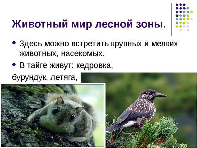 Животный мир лесной зоны. Здесь можно встретить крупных и мелких животных, на...