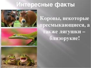 Интересные факты Коровы, некоторые пресмыкающиеся, а также лягушки – близорук
