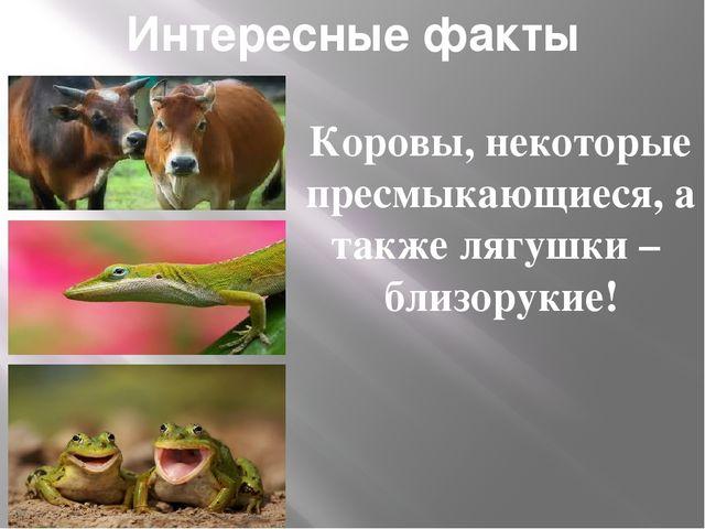 Интересные факты Коровы, некоторые пресмыкающиеся, а также лягушки – близорук...