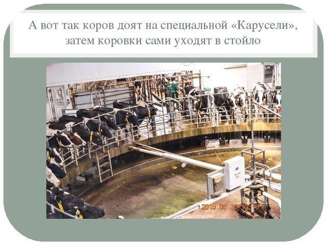 А вот так коров доят на специальной «Карусели», затем коровки сами уходят в с...