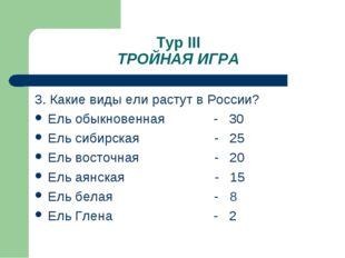 Тур III ТРОЙНАЯ ИГРА 3. Какие виды ели растут в России? Ель обыкновенная - 30