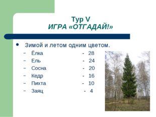 Тур V ИГРА «ОТГАДАЙ!» Зимой и летом одним цветом. Ёлка - 28 Ель - 24 Сосна -