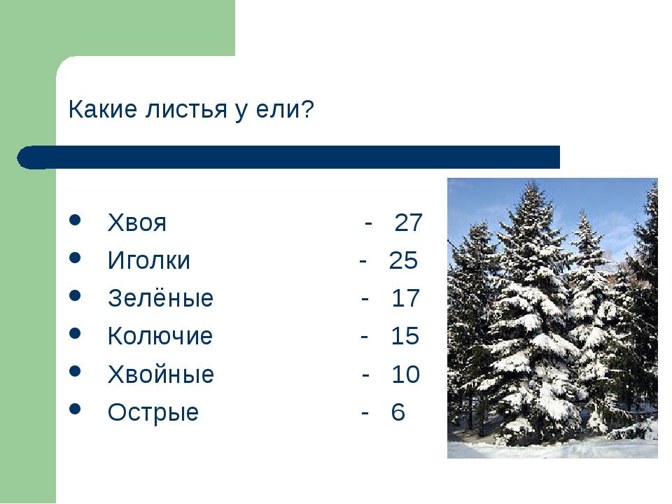 Какие листья у ели? Хвоя - 27 Иголки - 25 Зелёные - 17 Колючие - 15 Хвойные -...