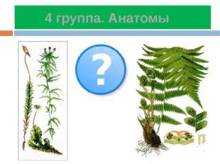 4 группа. Анатомы