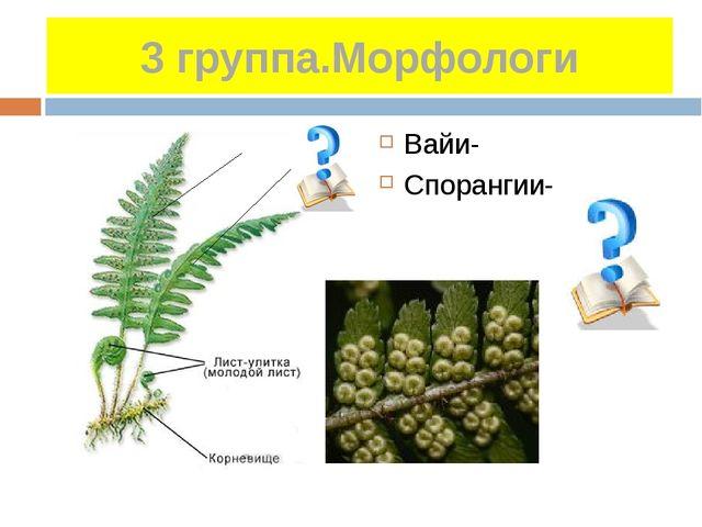 3 группа.Морфологи Вайи- Спорангии-