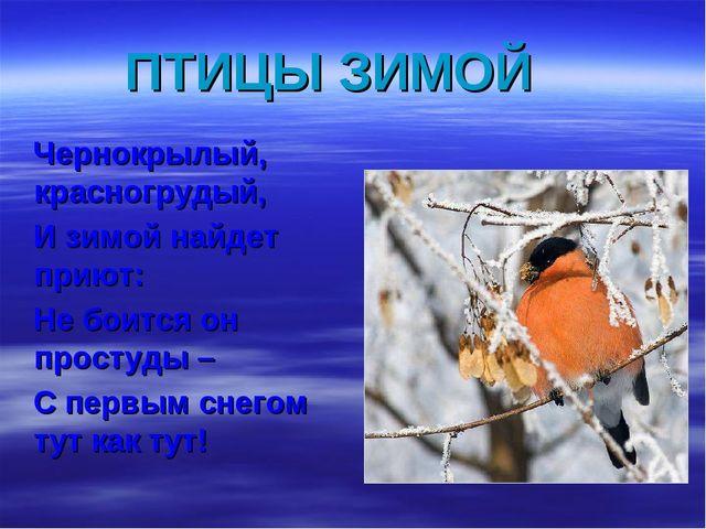 ПТИЦЫ ЗИМОЙ Чернокрылый, красногрудый, И зимой найдет приют: Не боится он про...
