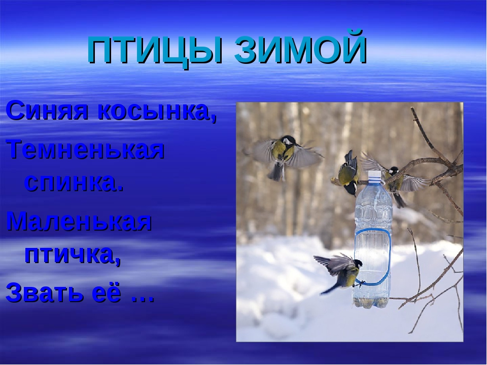 ПТИЦЫ ЗИМОЙ Синяя косынка, Темненькая спинка. Маленькая птичка, Звать её …