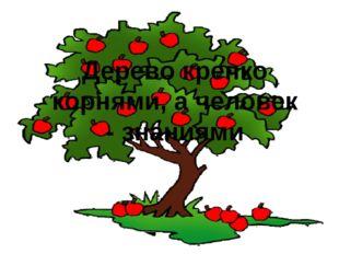 Дерево крепко корнями, а человек - знаниями
