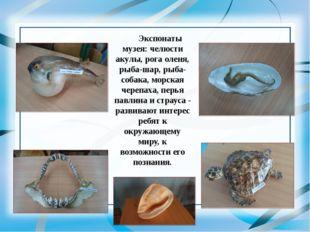 Экспонаты музея: челюсти акулы, рога оленя, рыба-шар, рыба-собака, морская че