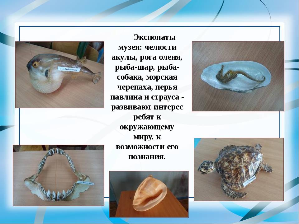 Экспонаты музея: челюсти акулы, рога оленя, рыба-шар, рыба-собака, морская че...