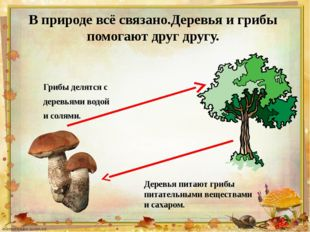 В природе всё связано.Деревья и грибы помогают друг другу. Грибы делятся с де