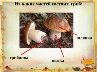 Из каких частей состоит гриб: ножка шляпка грибница