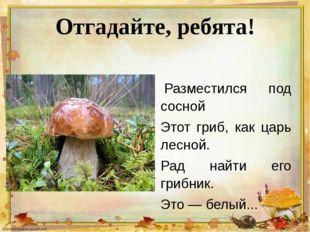 Отгадайте, ребята! Разместился под сосной Этот гриб, как царь лесной. Рад на