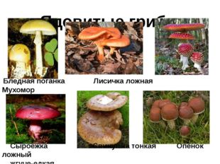 Ядовитые грибы Бледная поганка Лисичка ложная Мухомор Сыроежка Свинушка тонк