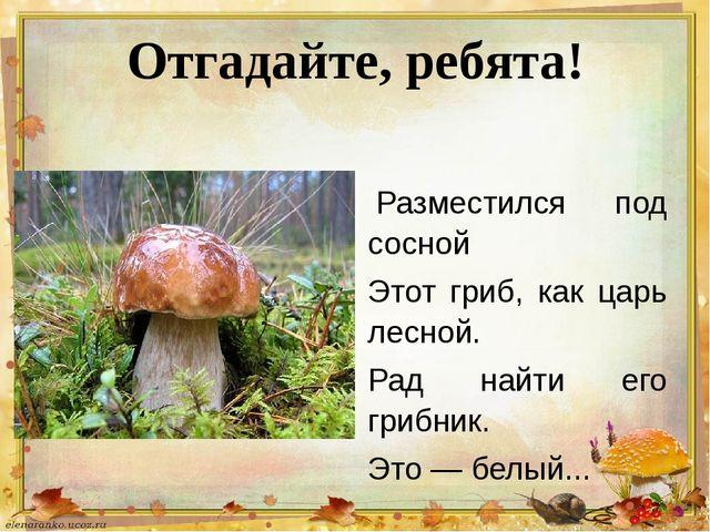 Отгадайте, ребята! Разместился под сосной Этот гриб, как царь лесной. Рад на...