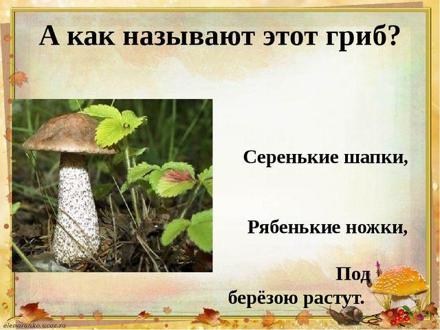 А как называют этот гриб? Серенькие шапки, Рябенькие ножки, Под берёзою расту...