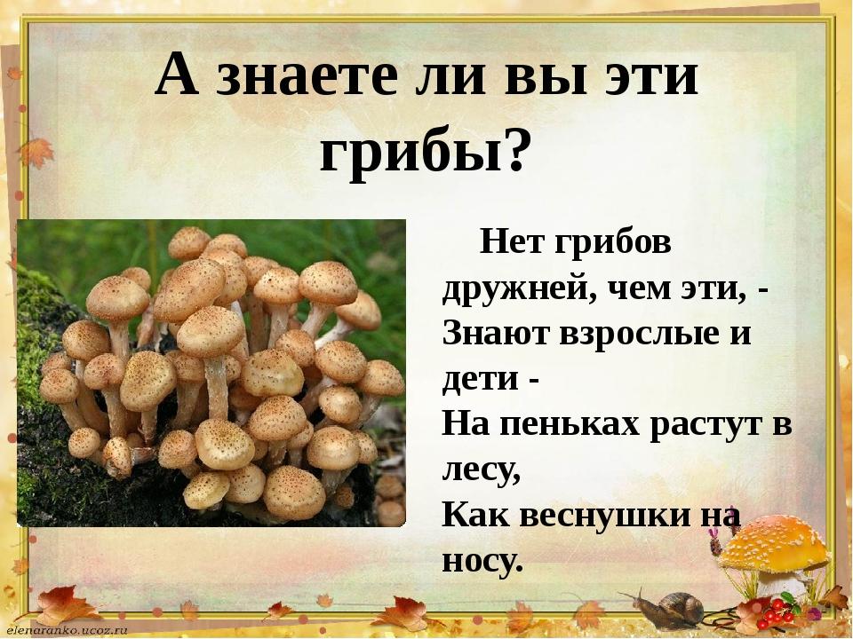 А знаете ли вы эти грибы? Нет грибов дружней, чем эти, - Знают взрослые и дет...