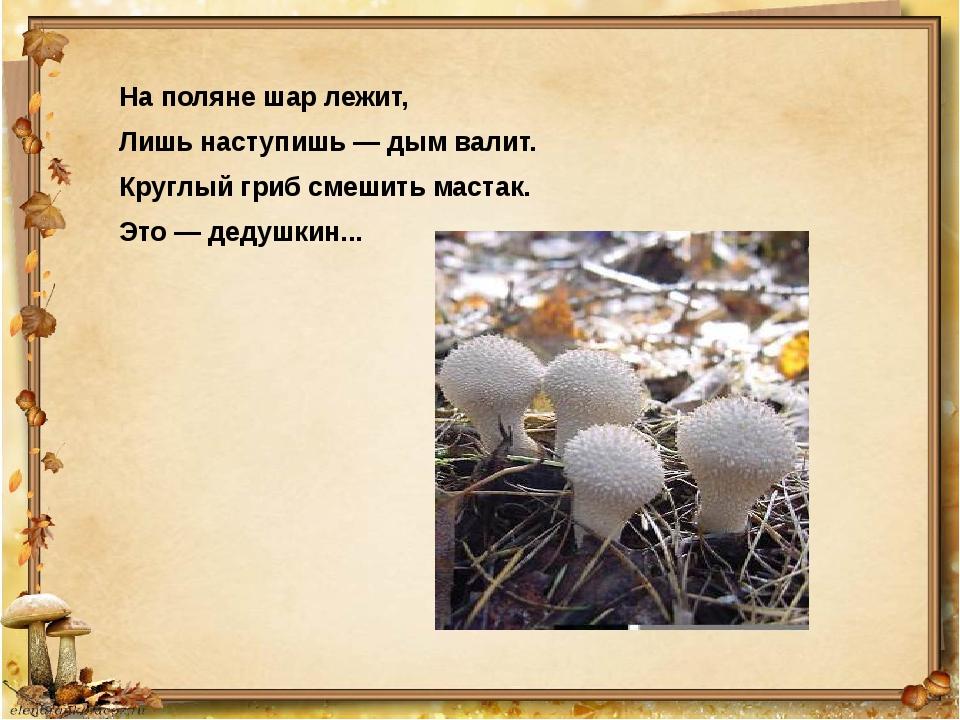 На поляне шар лежит, Лишь наступишь — дым валит. Круглый гриб смешить мастак....