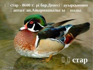 Құстар Құстар - 8600 түрі бар.Денесі қауырсынмен қапталған.Айырмашылығы ұшады.