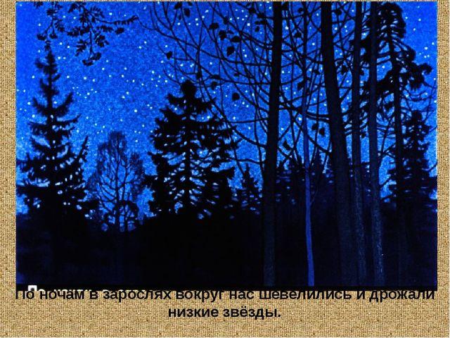 По ночам в зарослях вокруг нас шевелились и дрожали низкие звёзды.