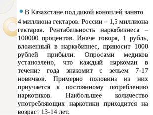 В Казахстане под дикой коноплей занято 4 миллиона гектаров. России – 1,5 милл