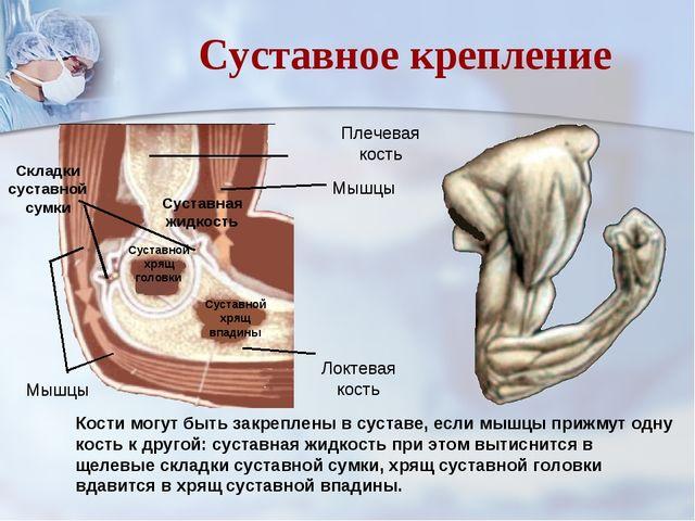 Суставные складки височно-нижнечелюстной сустав википедия