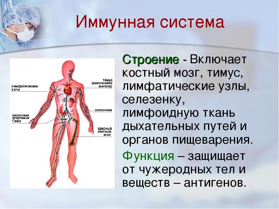 иммунная система человека картинки для днях, первого апреля