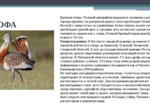 ДРОФА Крупная птица. Половой диморфизм выражен в основном в размерах: самец г