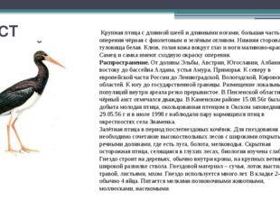 АИСТ ЧЁРНЫЙ Крупная птица с длинной шеей и длинными ногами, большая часть опе