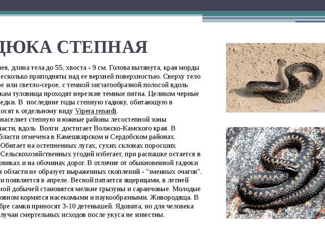 ГАДЮКА СТЕПНАЯ Небольшая змея, длина тела до 55, хвоста - 9 см. Голова вытяну...