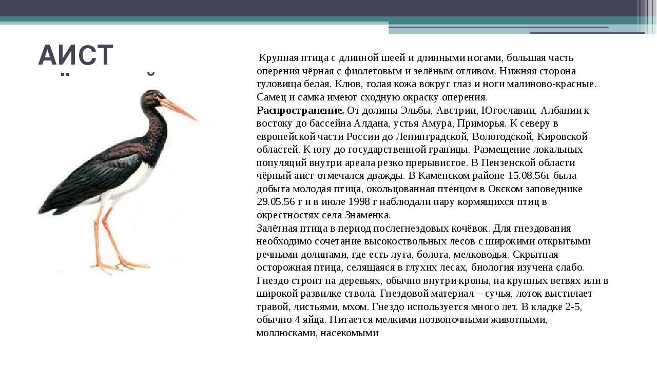 АИСТ ЧЁРНЫЙ Крупная птица с длинной шеей и длинными ногами, большая часть опе...