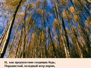 Поэзия Ф.И. Тютчева  о гармонии  человека и природы. И, как предч