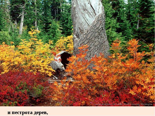 и пестрота дерев,