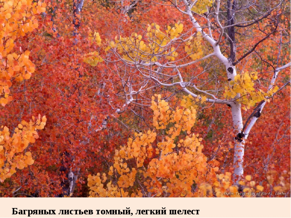 Багряных листьев томный, легкий шелест