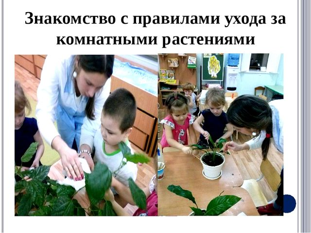 Знакомство с правилами ухода за комнатными растениями