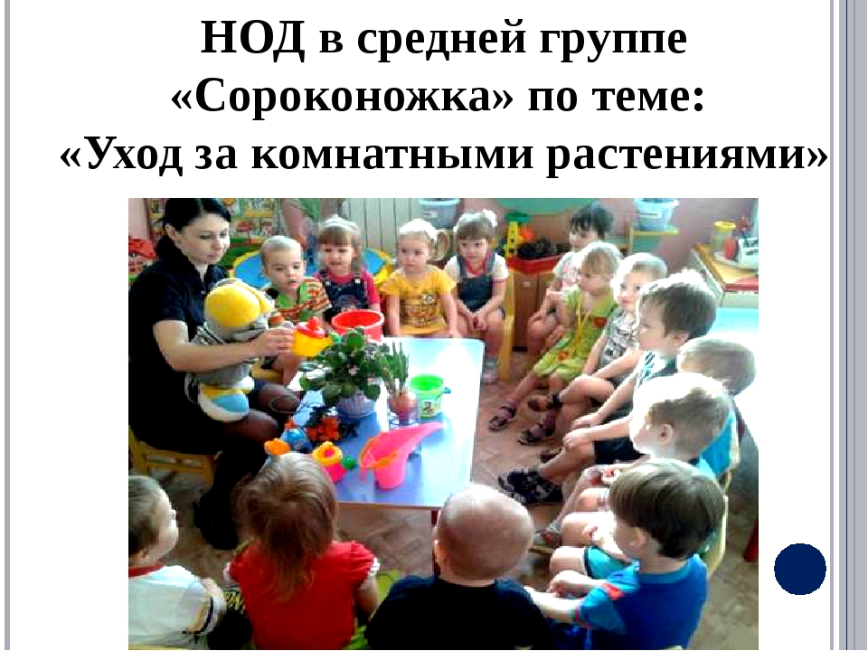 НОД в средней группе «Сороконожка» по теме: «Уход за комнатными растениями»