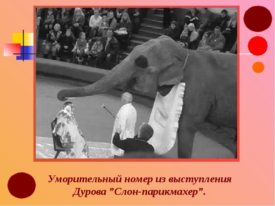 """Уморительный номер из выступления Дурова """"Слон-парикмахер""""."""
