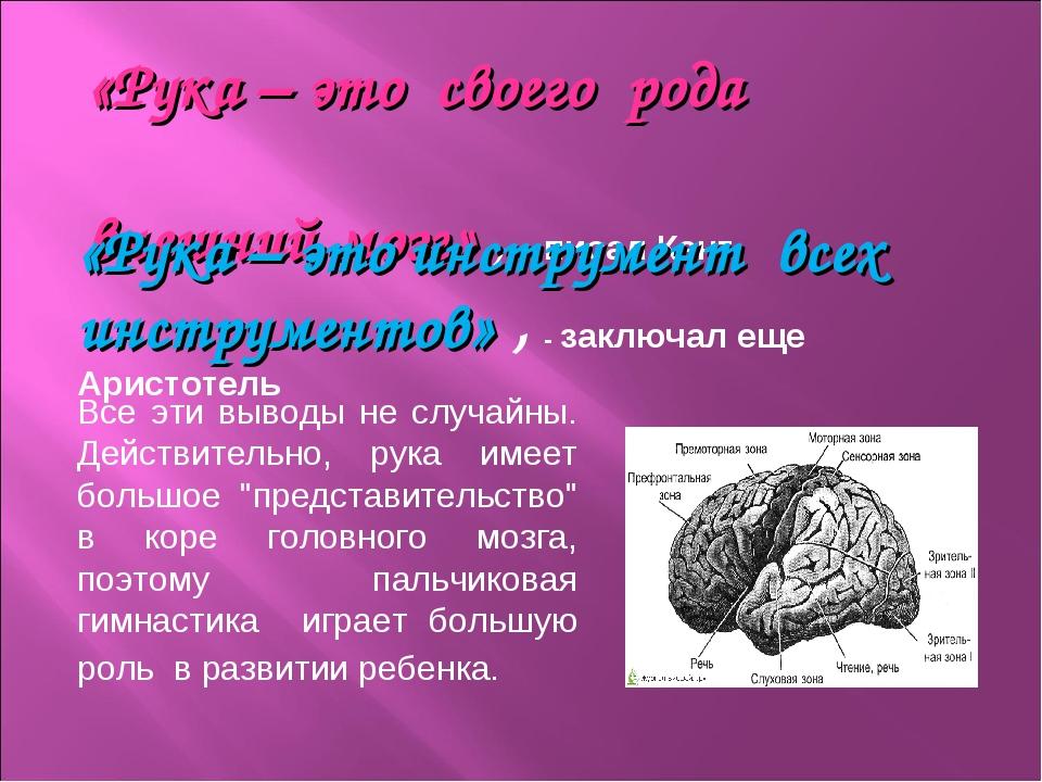 «Рука – это своего рода внешний мозг» , - писал Кант. Все эти выводы не случ...