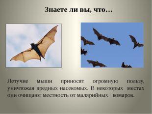 Знаете ли вы, что… Летучие мыши приносят огромную пользу, уничтожая вредных н