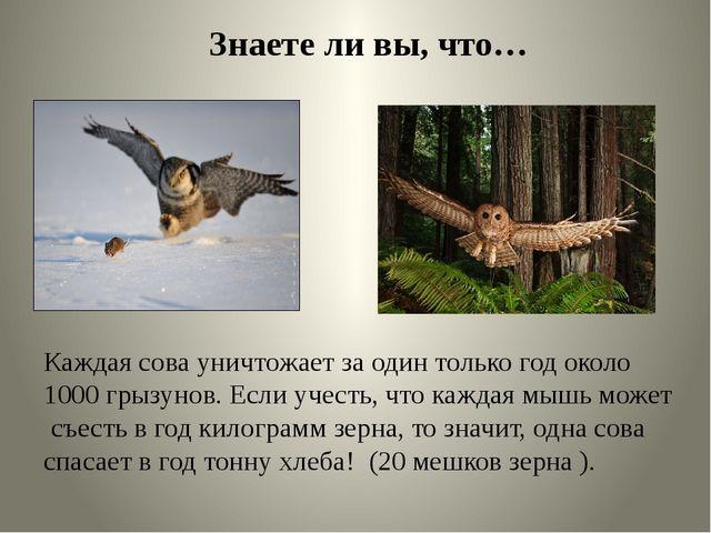 Знаете ли вы, что… Каждая сова уничтожает за один только год около 1000 грызу...