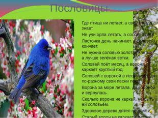 Пословицы Где птица ни летает, а своё гнездо знает. Не учи орла летать, а сол