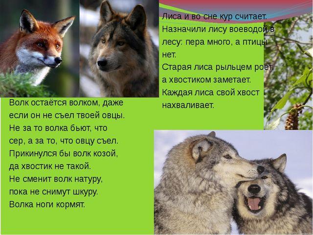 Волк остаётся волком, даже если он не съел твоей овцы. Не за то волка бьют,...