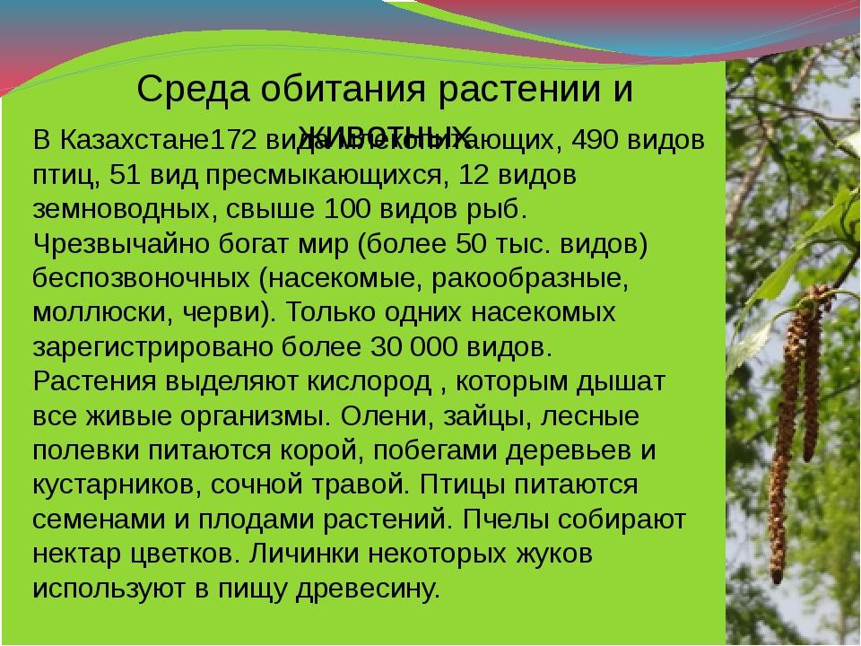 Среда обитания растении и животных В Казахстане172 вида млекопитающих, 490 ви...