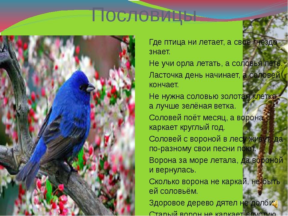 Пословицы Где птица ни летает, а своё гнездо знает. Не учи орла летать, а сол...