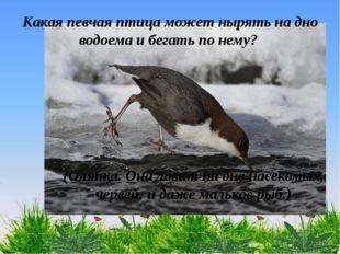 Какая певчая птица может нырять на дно водоема и бегать по нему? (Оляпка. Она