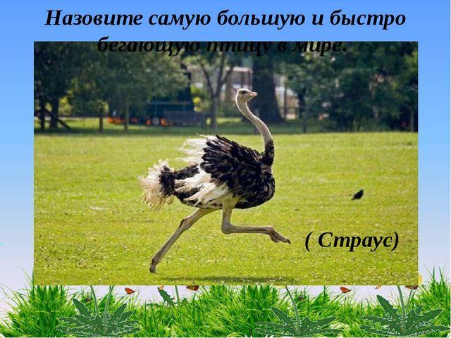 ( Страус) Назовите самую большую и быстро бегающую птицу в мире.