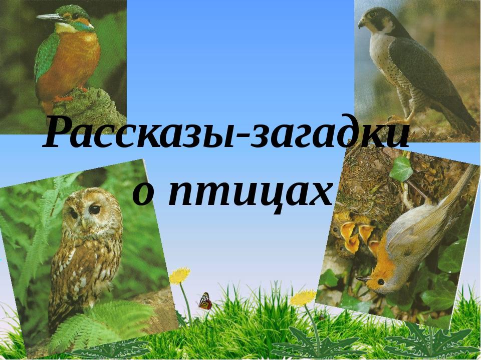 Рассказы-загадки о птицах