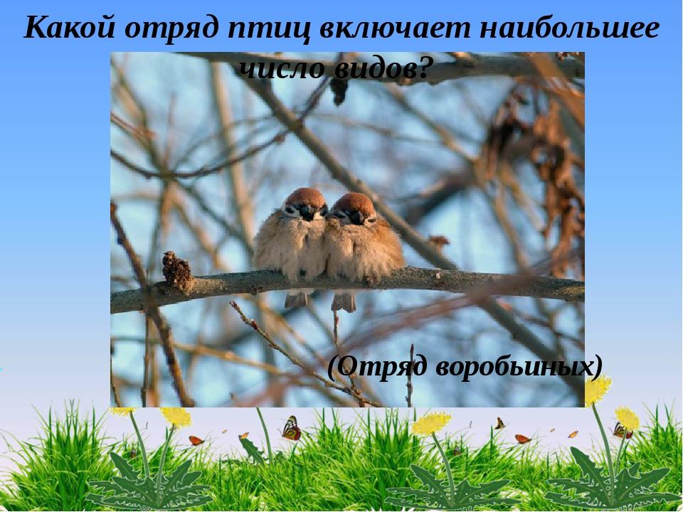 (Отряд воробьиных) Какой отряд птиц включает наибольшее число видов?